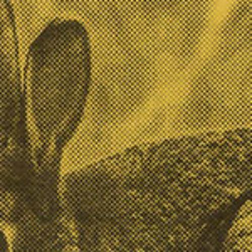 Co9's avatar
