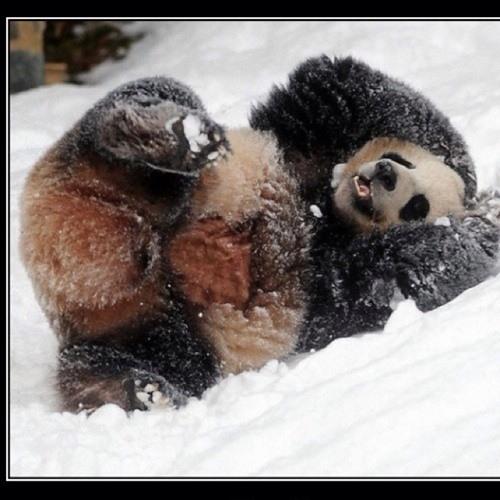 Big Panda's avatar