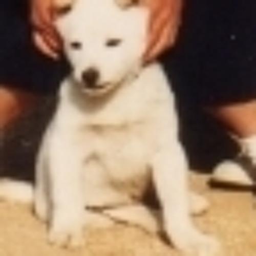zakichu's avatar