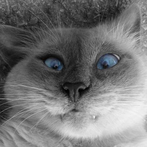 widaah's avatar