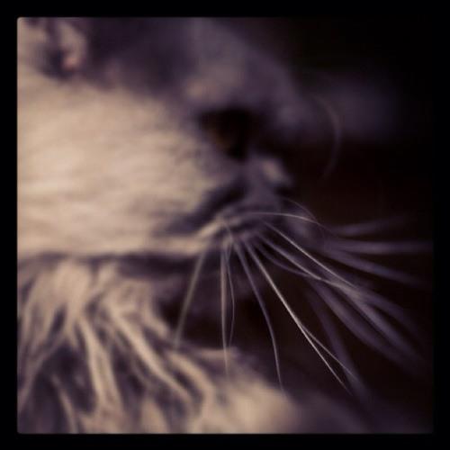 katpsi's avatar