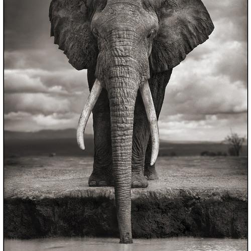 roGue elephant's avatar