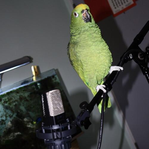 Parrot Audio's avatar