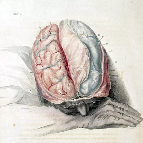 brainbag's avatar