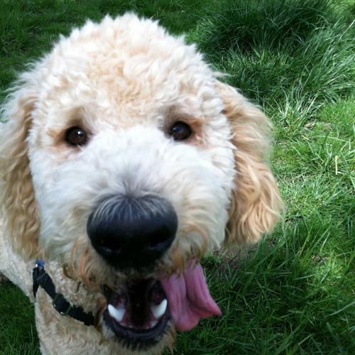 Dog Mix's avatar