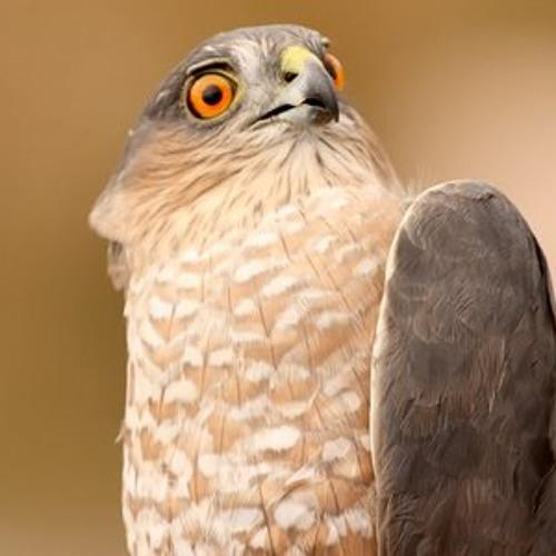 Karate Hawk's avatar