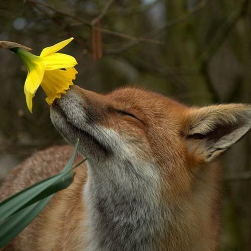 Fox's avatar