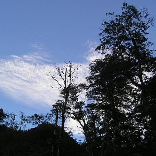 Nalca Asesina, Los árboles negros.'s avatar