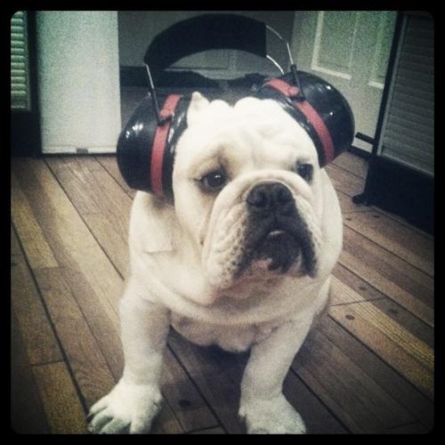 Audio Fever's avatar