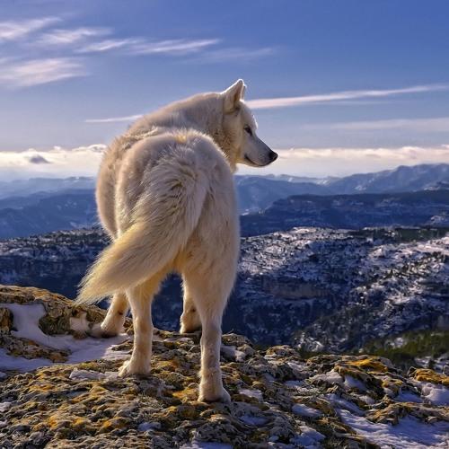 Wowolf's avatar