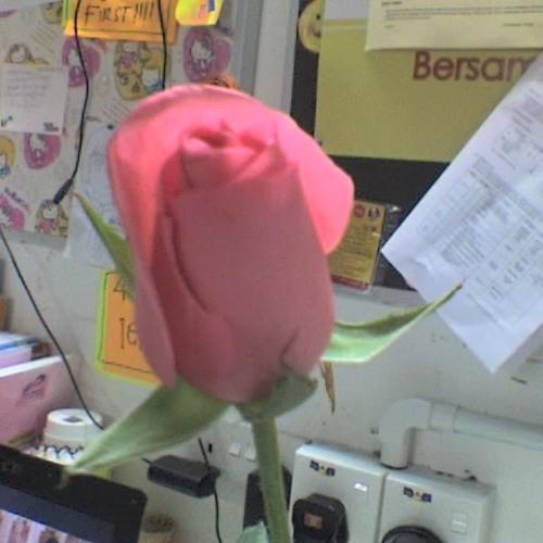 love rosy's avatar