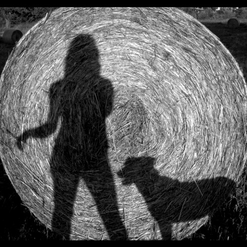 Harvest Moon - Neil Young, 1992 ( feat. Roy Taylor on bluesharp)