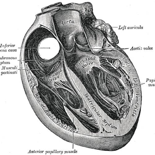 arterymusic's avatar