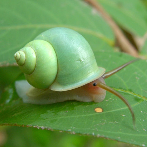 snailcast's avatar