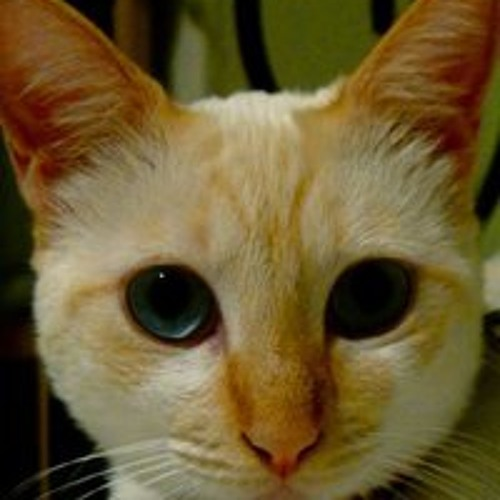 Prisca Tormento's avatar