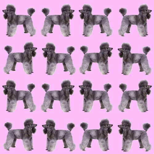 16 Poodles's avatar