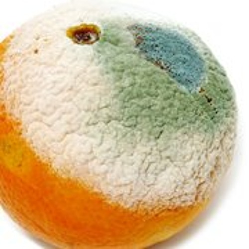 Orange Skin Food's avatar