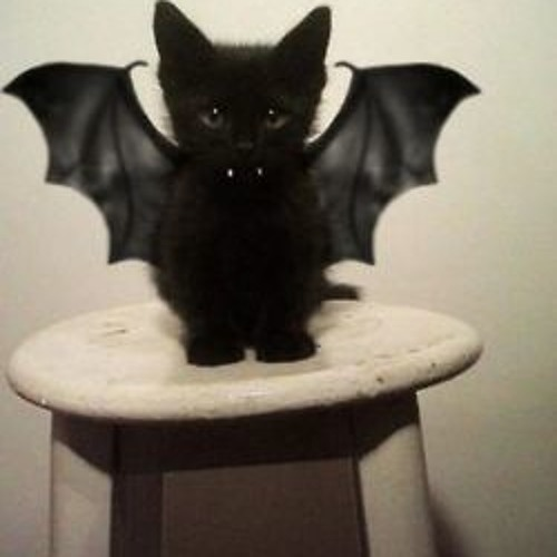 BatCat's avatar
