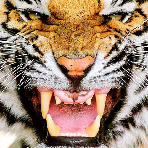 -=NzN=-Tigerclaw--Na,na,na--Remixx