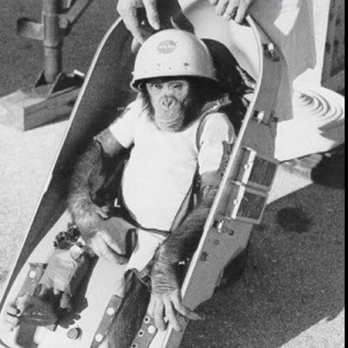 crusty space chimp's avatar