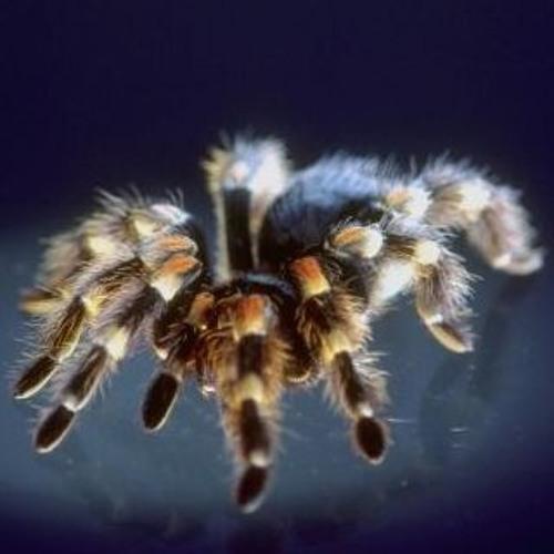Tarantula's Web's avatar
