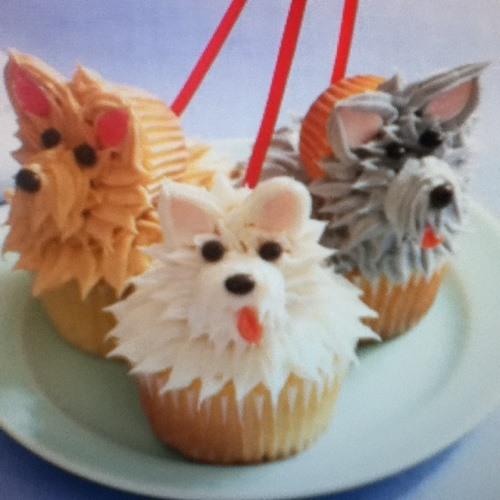 cupcake knr's avatar