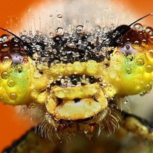Thunder_Bug's avatar