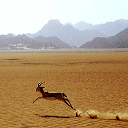 The Gazelle's avatar