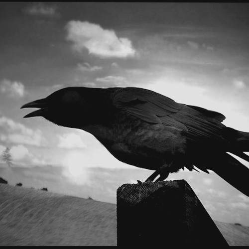 the raven grief This is a short trailer for mejpye's film adaptation of edgar allan poe's the raven, for which i supplied the narration my narrative interpretation of the poem is rather different from various.
