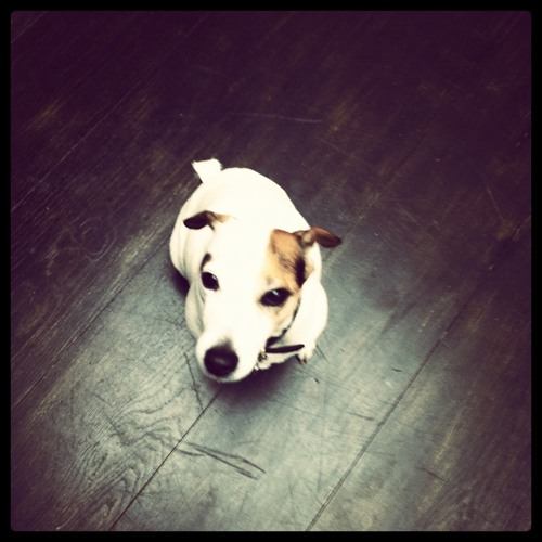 DJ Doggy's avatar