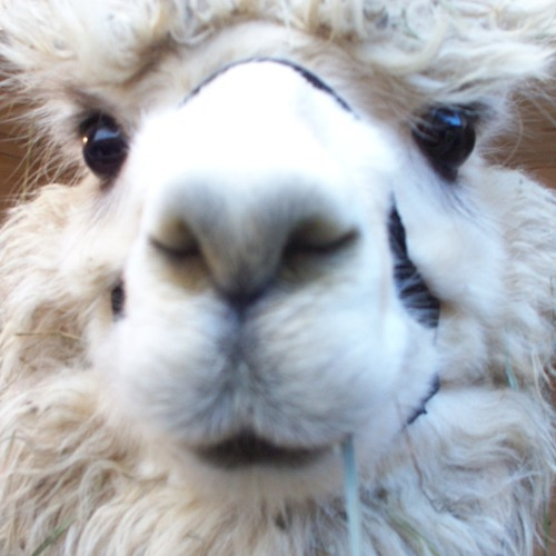 Laumas's avatar