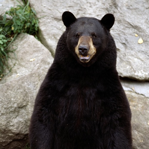 Ebola Bear's avatar