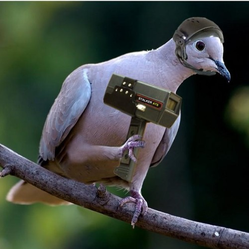 Pigeon Sauce's avatar