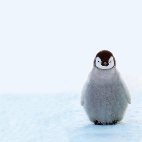 Stereo Penguin's avatar