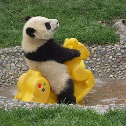 Lifted Panda ☁'s avatar
