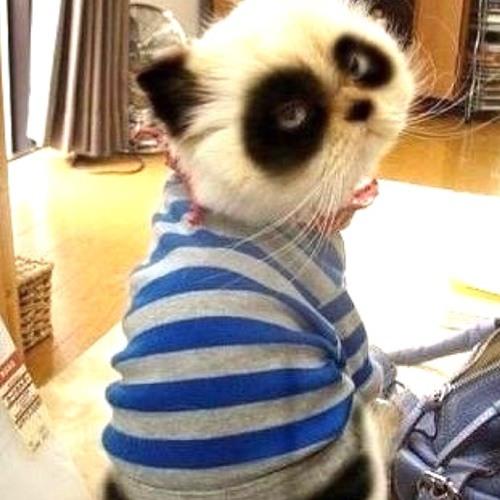 chinesexusong143's avatar