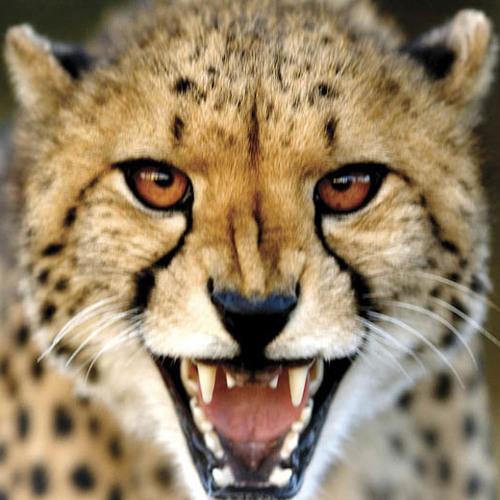 Lilrob05's avatar