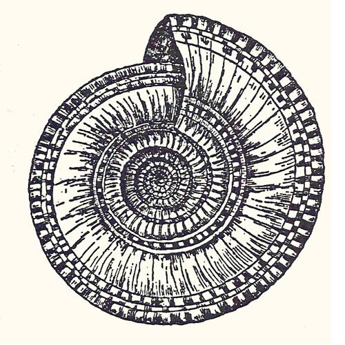 ChUPACONChA's avatar