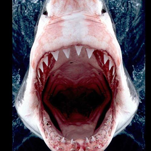 Shark Scream's avatar