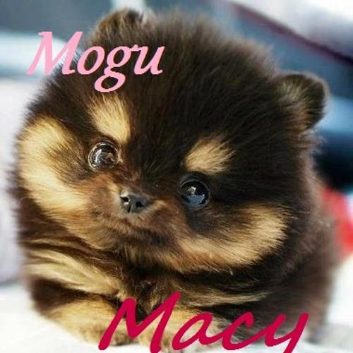 Mogu Macy's avatar