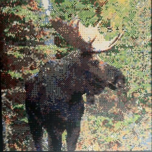 Angreh Moose's avatar