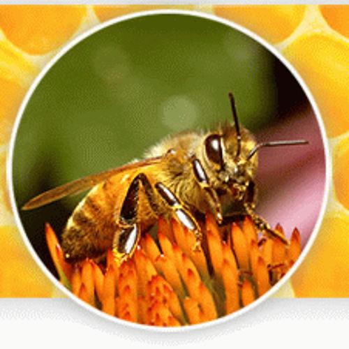Beezone's avatar