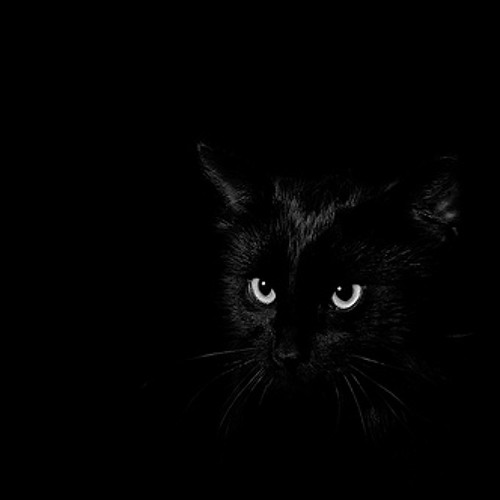 blacksoul cat's avatar