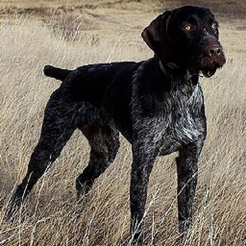 La-Di-Dawg's avatar