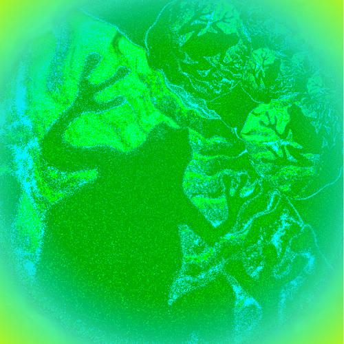 Bearded Tree Frog's avatar