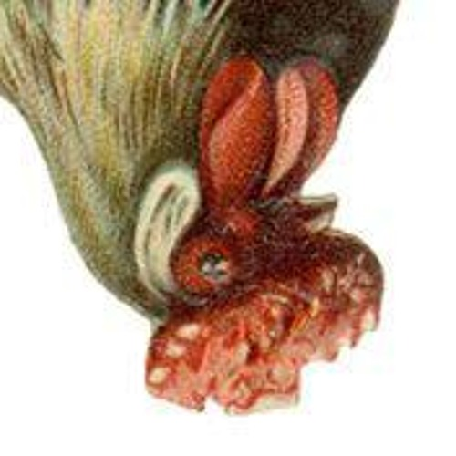 los.pollos.locos's avatar