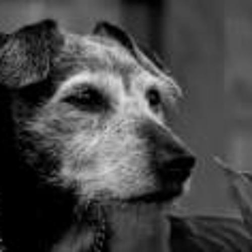 Paul N Donna Davis's avatar