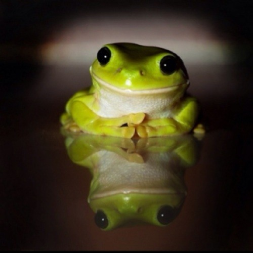 Frogster's avatar