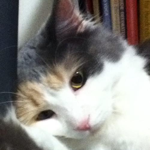 SkittleKat's avatar