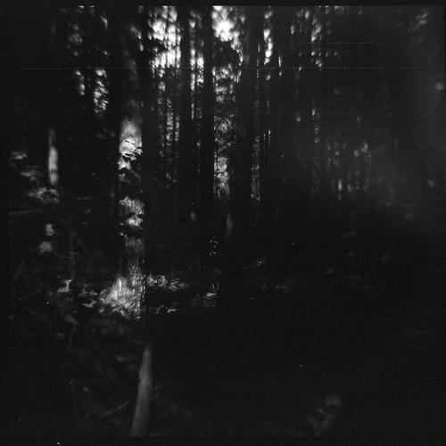 Grim Wood Trio's avatar